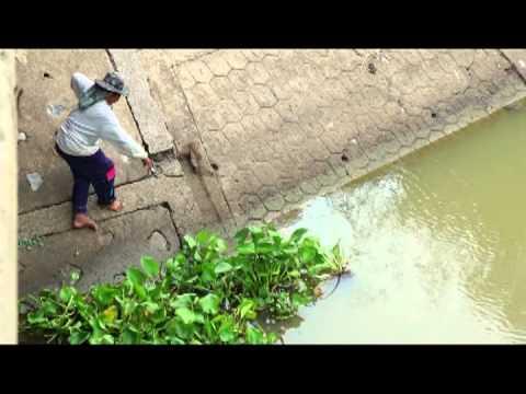 ๒๓ ก.ค. ๕๖ วิถีชาวบ้าน จับปลา