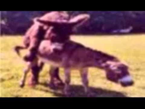 Anuncio noticias con loquendo + muerte del burro de los cojones.wmv