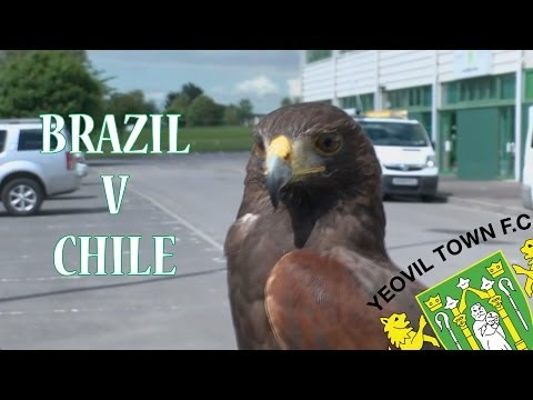 HARVEY THE HAWK WORLD CUP PREDICTION - BRAZIL V CHILE