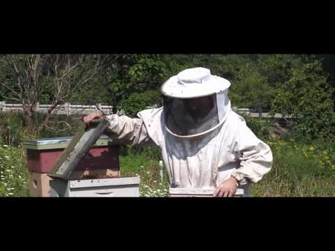 Portrait Of An Urban Beekeeper