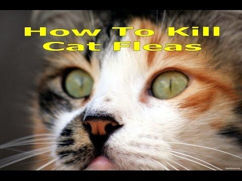 Flea Control and Flea Bite Allergies in Cats - Worldnews.com