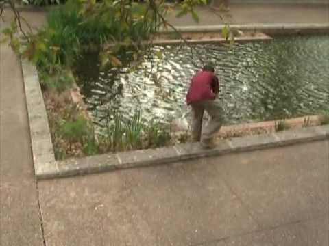Restocking the reflection pool with koi at the houston zoo for Koi show pool