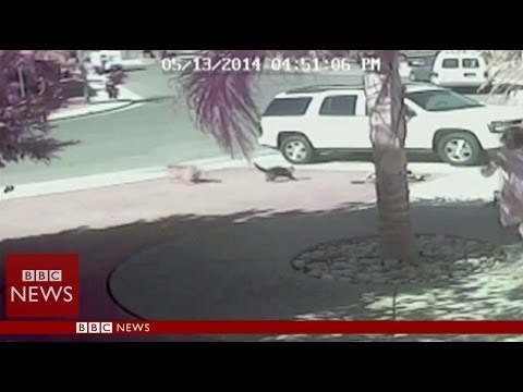 'Super Cat' saves boy from dog attack in California