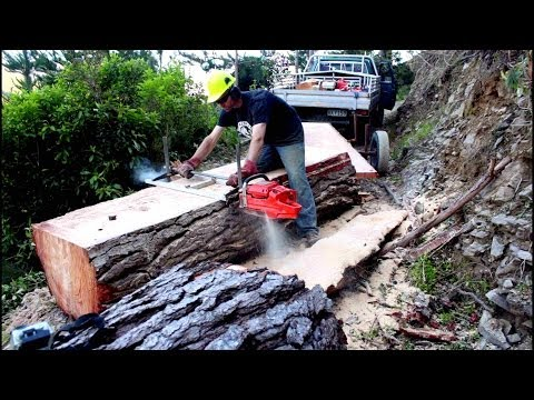 Felling a big pine tree & milling slabs with an Alaskan Chainsaw Mill