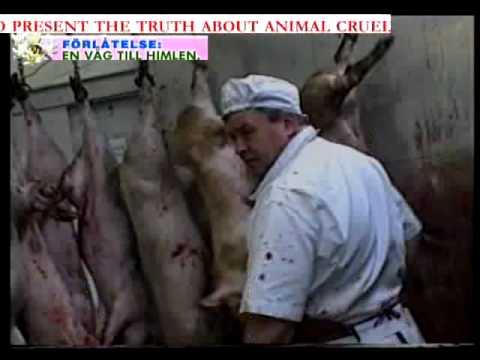 Án tử hình cho loài heo(Sự thật kỹ nghệ thịt)