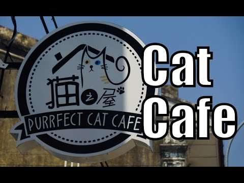 Purrfect Cat Cafe in Georgetown - Penang, Malaysia