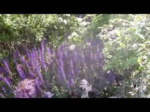 London's Hyde Park...Princess Diana Memorial Garden......