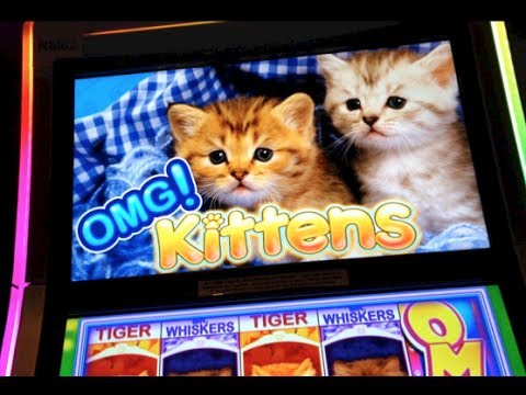 OMG Kittens Slots - Free Slot Machine Game - Play Now