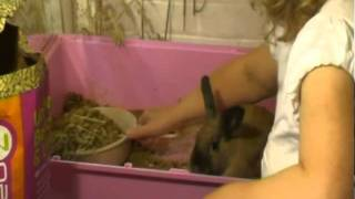 How To Use SmartBedz Litter For Rabbits.avi