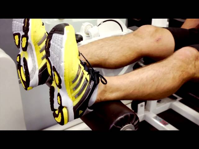 Muscles Worked in a Seated Leg Curl : Leg & Back Exercises