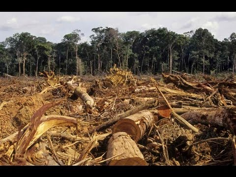Deforestation: a reality and a warning