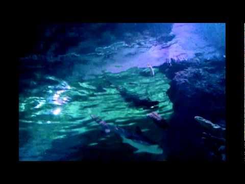 Sea Life Aquarium Grapevine Texas 2011 Youtube