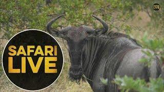 safariLIVE - Sunrise Safari - May, 19. 2018