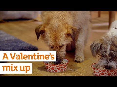 Sainsbury's Valentines Day 2018 – The Mix Up