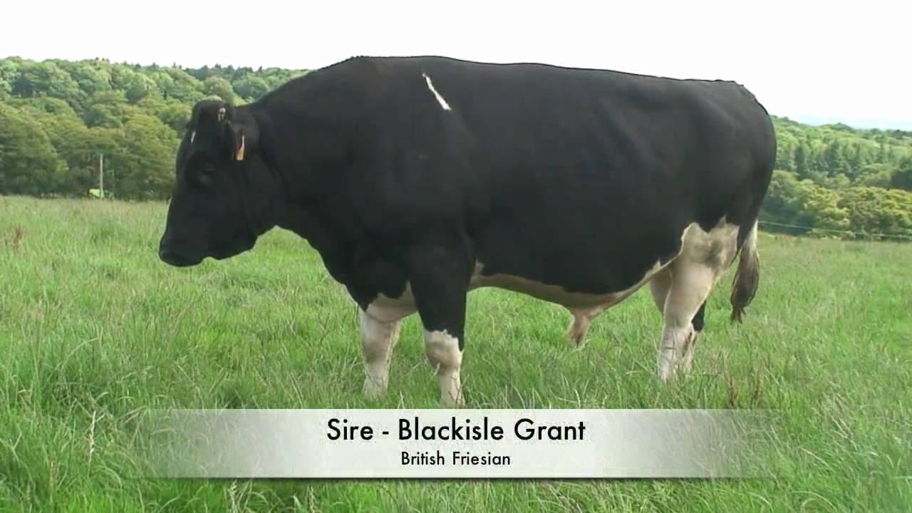 Dairy Sires Catalog - crinet.com