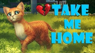 POOR LITTLE KITTEN SAD STORY | TRY NOT TO CRY