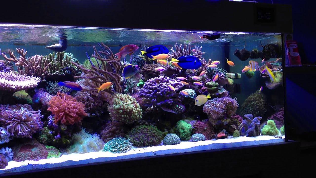 meerwasser aquarium 1000l youtube. Black Bedroom Furniture Sets. Home Design Ideas