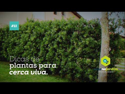 Dicas de plantas para cerca viva