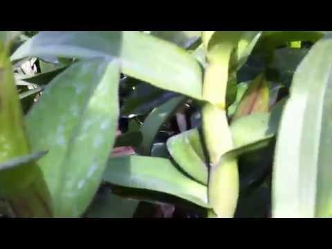 Vườn hoa lan ở Bình Dương, vườn hoa lan trực tuyến 0918448072