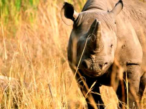 Rhino Poaching in Zimbabwe - Imire radio interview