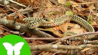 Conocimiento del medio: Las aves y los reptiles