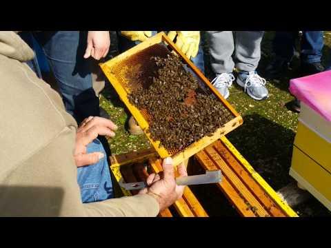 Μελισσοκομία για νέους - Επιθεώρηση στις αρχές της άνοιξης