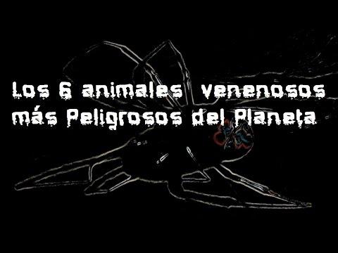Top: Los 6 animales venenosos más peligrosos del planeta