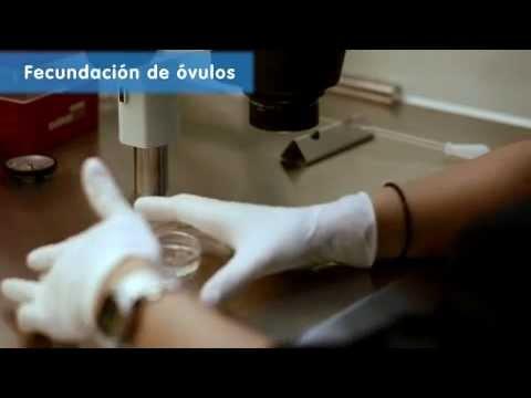 Videos de fecundación in vitro – IVI, España, UE, 2013