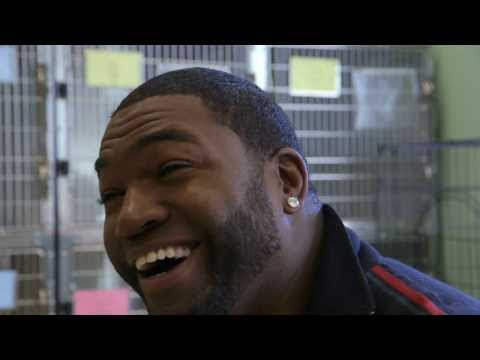 Pedigree | A Home Run for Dogs: A David Ortiz Story (Short version)