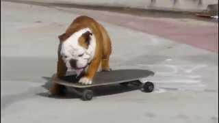 Perro en patinete