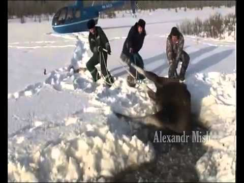 Good people rescuing animals in bad situations,