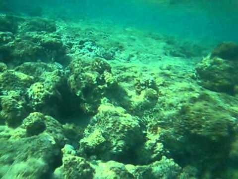 Кормёжка рыб Египет-Хургада-Аладин4* : египет хургада