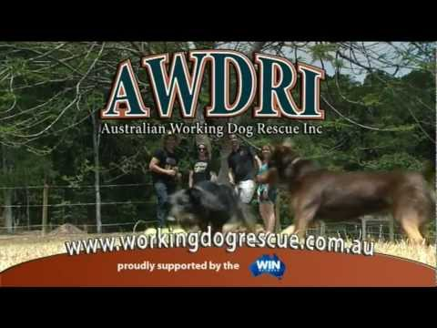 AWDRI 30 second commercial