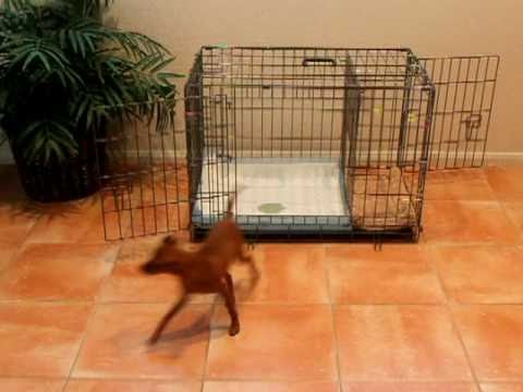 puppy apartment potty training how to potty train a
