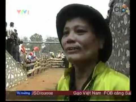Hoi choi trau Tuyen Quang