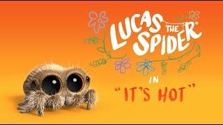 Pavúk Lucas - Je horúco