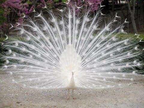 10 loài chim đẹp nhất hành tinh