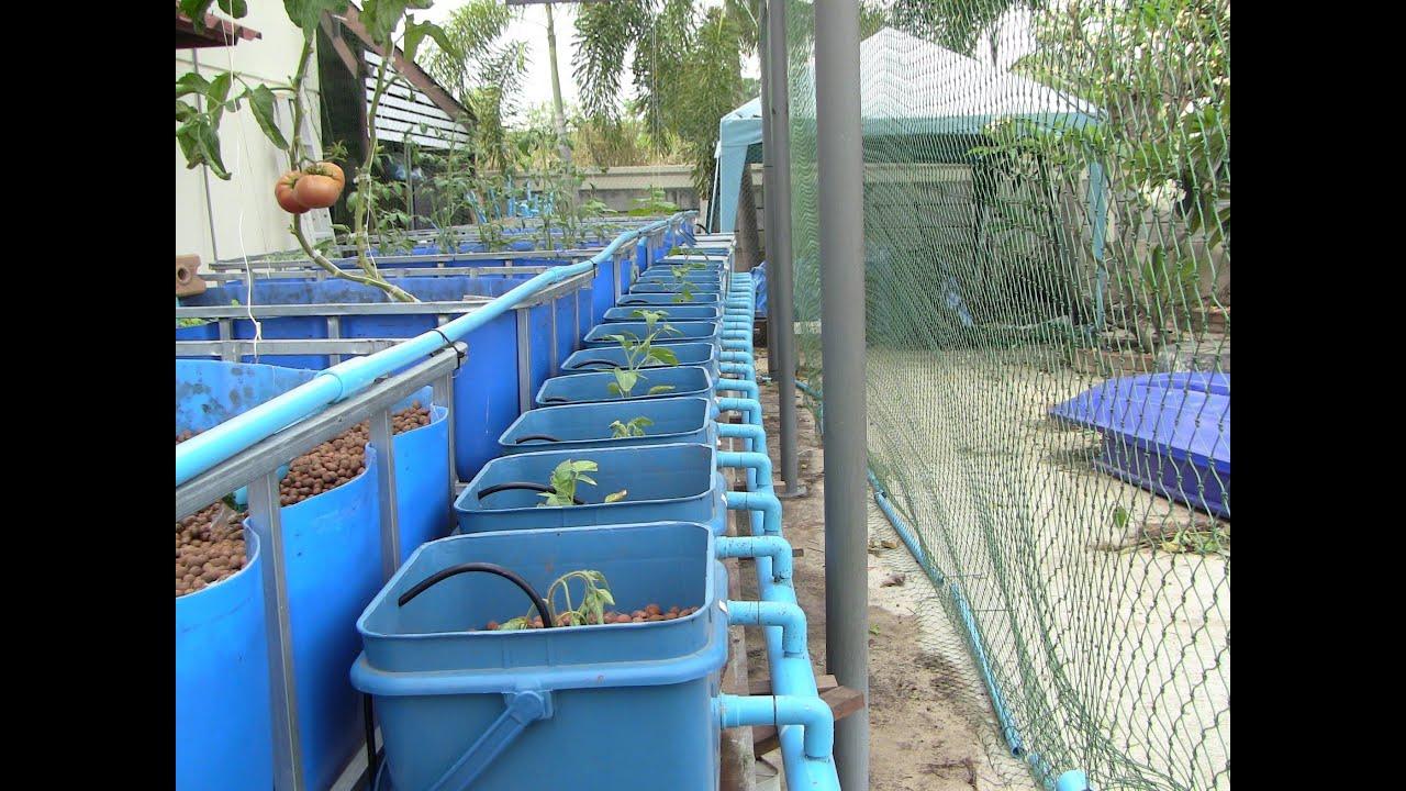 Aquaponics dutch buckets youtube for Hydroponics aquaponics