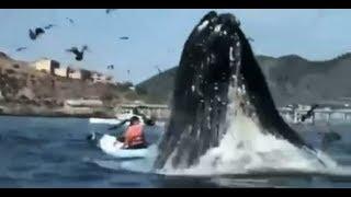Gran susto con ballena