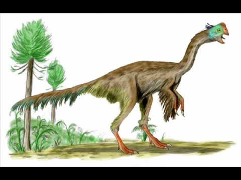 Greatest Misconception 1: Birds Evolved from Dinosaurs