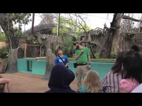Baby's Day Out - Best of the Dallas Zoo