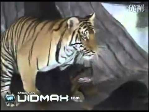 Tiger has sex with the Dog - unthinkable ?