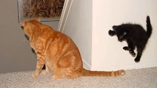 YOU JUST CAN'T HOLD YOUR LAUGH IF YOU SEE THIS! - Funny ANIMAL compilation