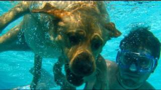 Dog Swimming Underwater! (6.11.09 Day 42)