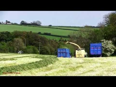 The Blue Dooleys! - Silaging with Krone BigX 700.