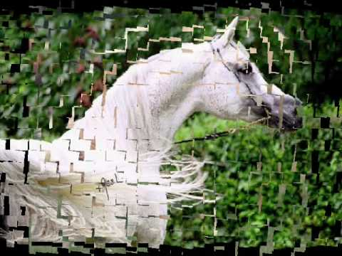 *konji-slike*,