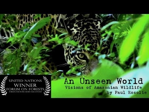 An Unseen World - Amazon Rainforest Wildlife by Paul Rosolie (web version)