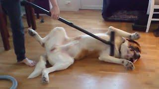 Faily psov