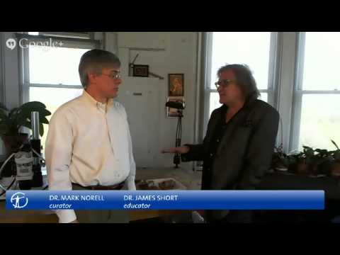 Museum Curator Mark Norell Discusses Rare Pterosaur Fossils - Live!