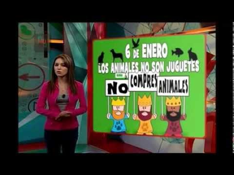 TT: Día de Reyes y mueren Nelson Ned y Alma Muriel